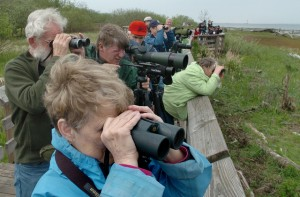 Birding at Bald Head Island