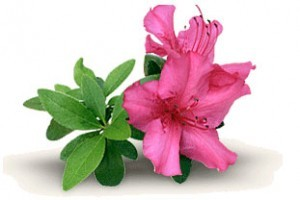 The 68th Annual Azalea Festival @ Various Locations in Wilmington, NC