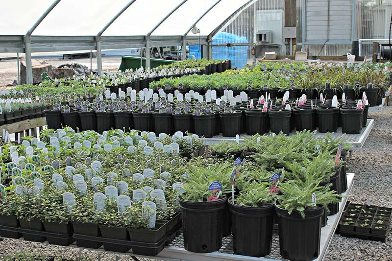 Master Gardeners Plant Sale Wrightsville Beach Nc Wrightsville