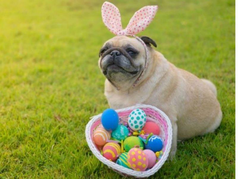 Oak Island Doggie Eggstravaganza